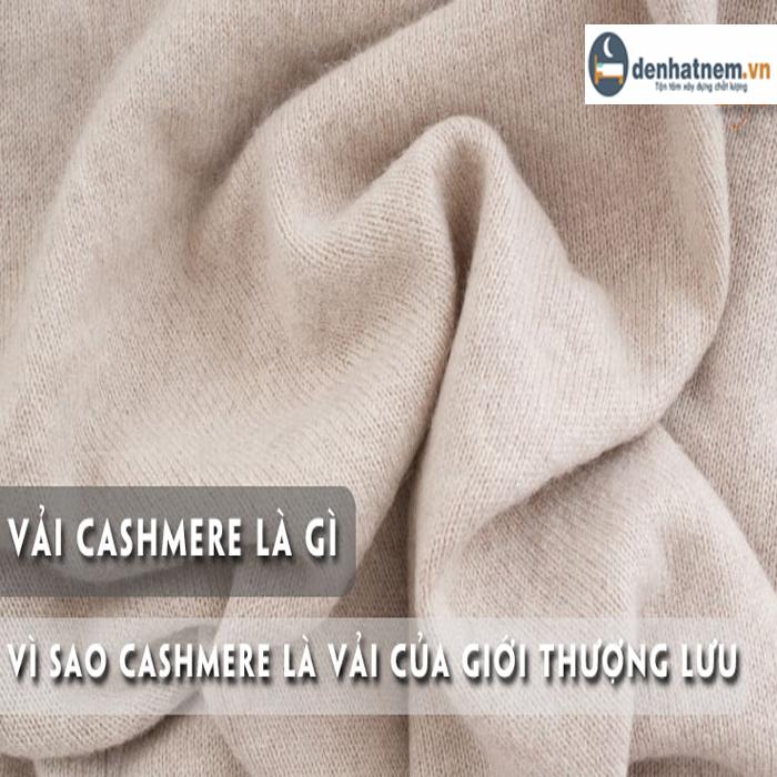 Vì sao vải Cashmere là vải dành cho giới thượng lưu?